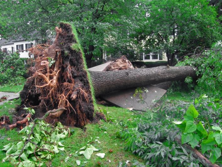 Atlanta Emergency Tree Service