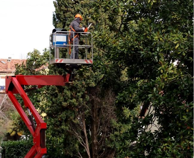 Atlanta Tree Trimming Service