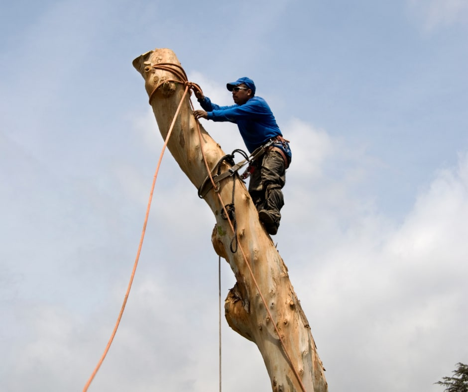 Tree Removal ATL